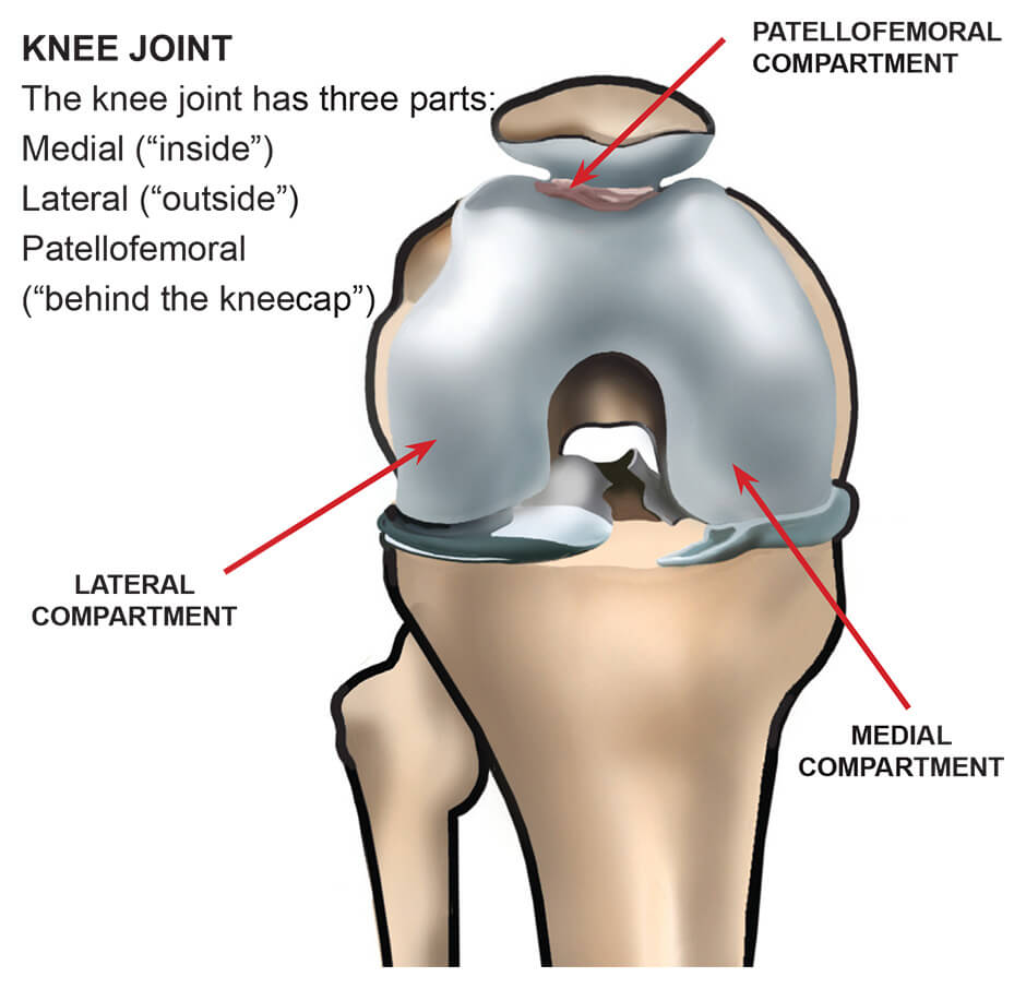 diagram showing the compartments of the knees joint